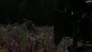 Trailers / Clips / Spots de Amanecer Part 2 - Página 4 7af145215994503