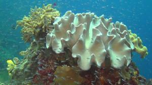 Niezwyk³y Ocean / Amazing Ocean (2012) PL.720p.BDRip.XviD.AC3-ELiTE / Lektor PL