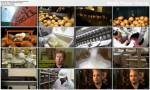 Fabryki Smaku / Food Factory (2012)  PL.DVBRip.XviD / Lektor PL