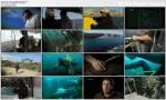 Wojny o morskie przysmaki / Abalone Wars (2012)  PL.DVBRip.XviD / Lektor PL