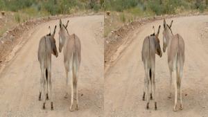 World Natural Heritage USA Grand Canyon (2012) 3D.BluRay.HSBS.1080p.DTS.x264-CHD3D