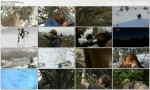 Ameryka?ska Puma / American Cougar (2011) PL.HDTV.1080i / Lektor PL