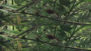 Birdpark (2012) 3D.1080p.Bluray.HOU.X264.DL-CHD3D