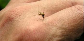 Digigit serangga - Ist