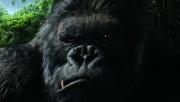Кинг Конг / King Kong (Наоми Уоттс, Эдриен Броуди, Джэк Блэк, 2005) 312072294373256
