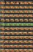 Showerroom 1506-1517 (Public shower room spy cam. Shower room fitness gym  hidden cams)