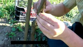 Садовая хирургия (2012) Видеокурс